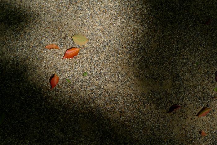 下鴨神社 糺の森で