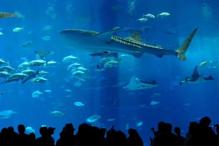 沖縄 美ら海水族館 大水槽