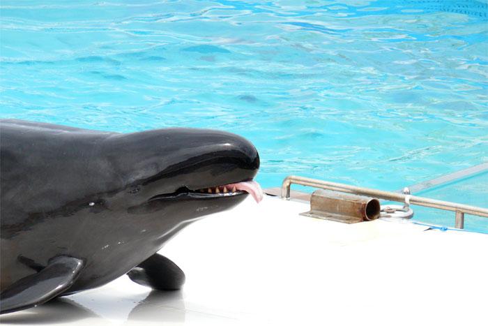 沖縄 美ら海水族館 イルカ
