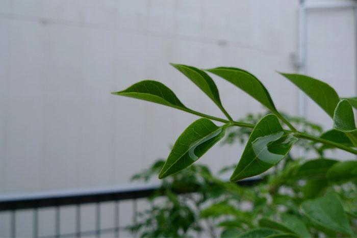水滴を蓄えた葉っぱ