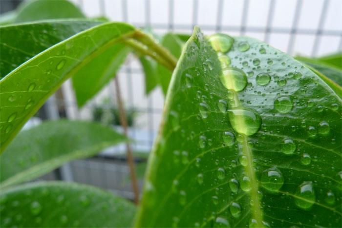 水滴と葉っぱたち