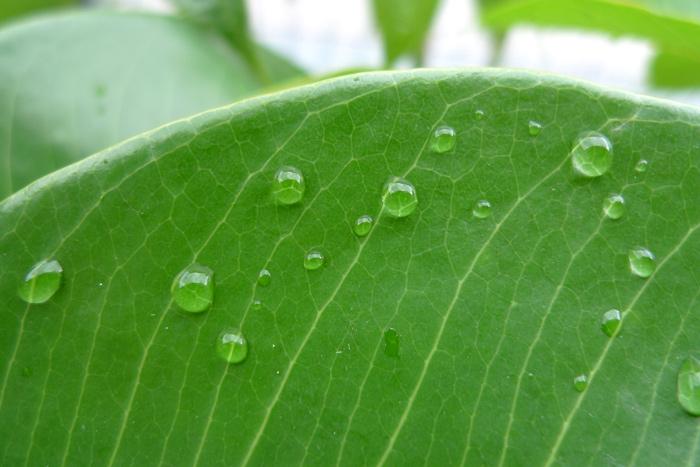 ベランダの水滴