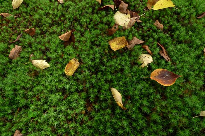 兼六園の苔と落ち葉