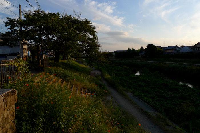 先週の河原
