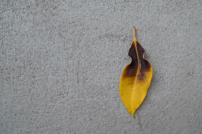 秋のベランダ