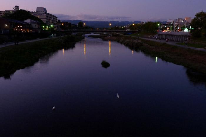 夕暮れの河原と白い鳥