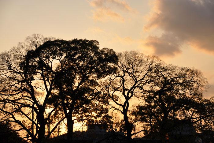 河川敷の夕日