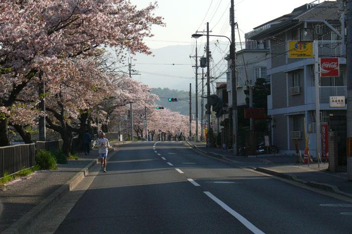 連なる桜並木