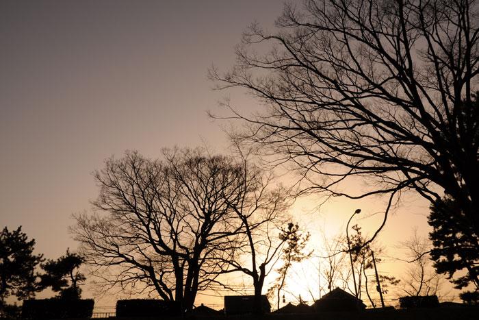 夕日の賀茂川の木々