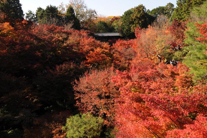 通天橋からの紅葉